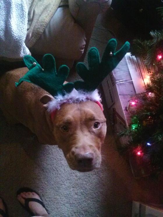 christmas khia reindeer