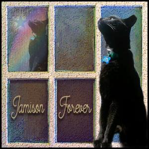 jamison-forever